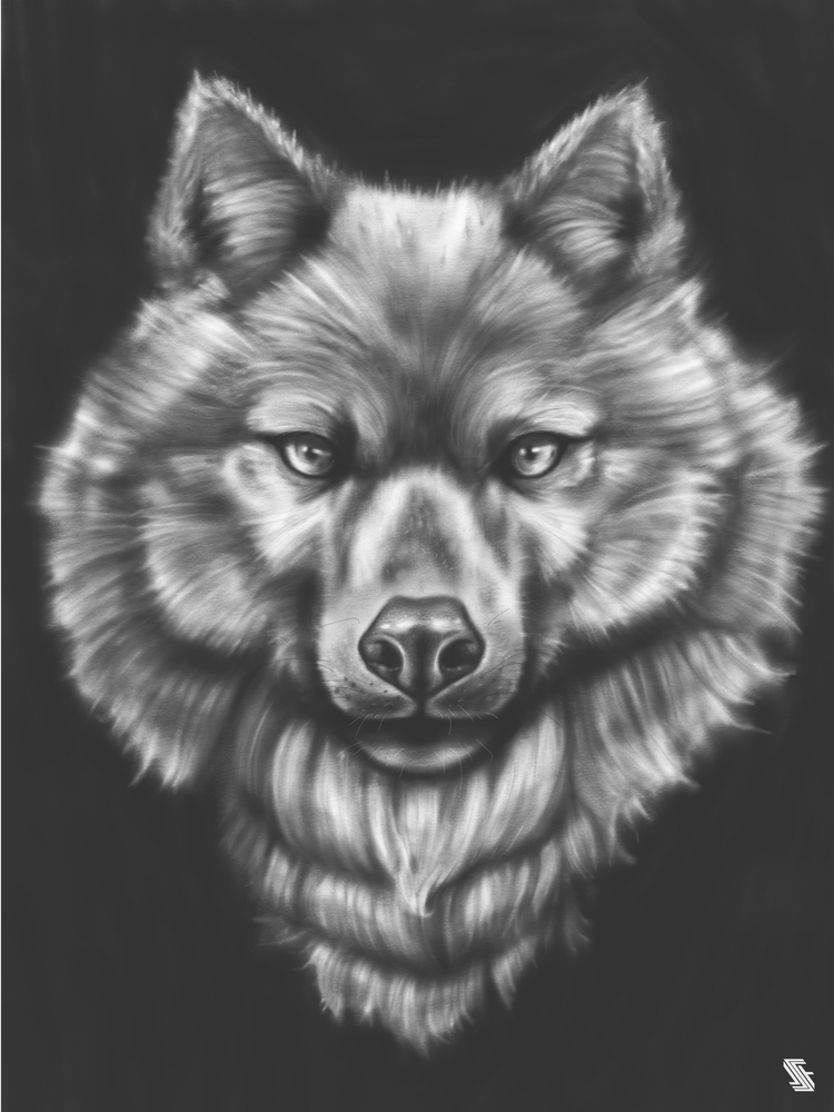 Wolf illustration - wolf, wolves - jstoutillustration | ello