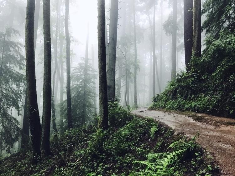 Cascadia - joshualee | ello
