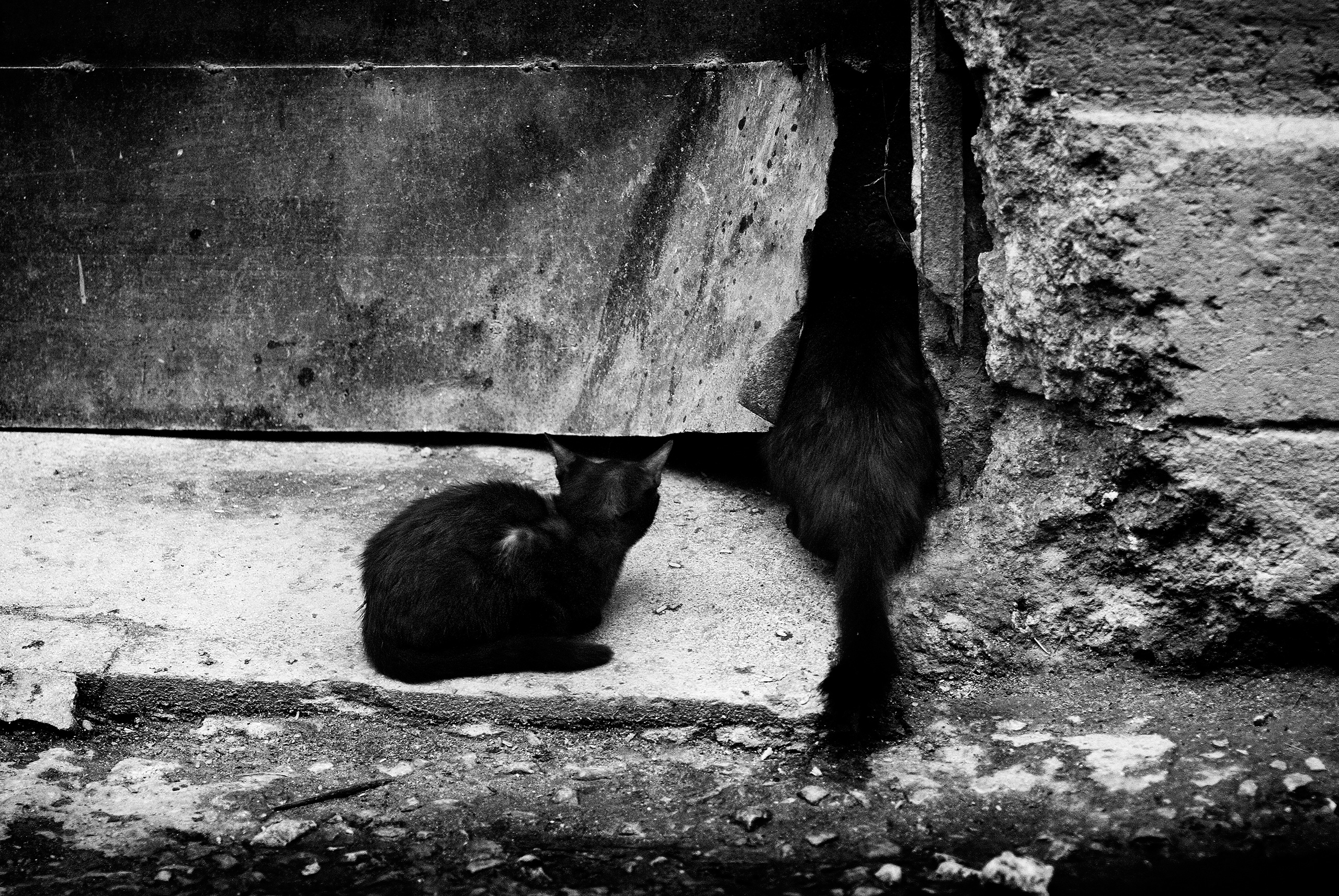 mystery curiosity - Habana, Cuba - christofkessemeier | ello