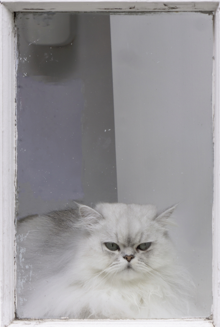 Cat window - cat, thoughtful, grumpy - notabene | ello