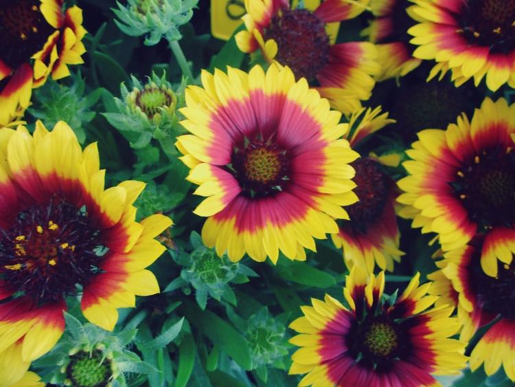 ✮ Incoming Summer Time year: Ju - dekodex   ello