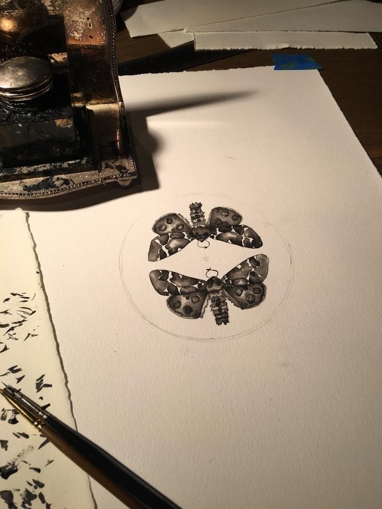moths, ink painting - moth, worksonpaper - alexakarabin | ello
