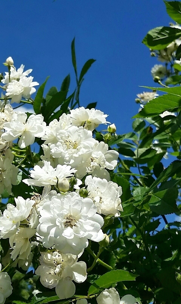 garden, flowers, whitegreenblue - aleksaleksa   ello
