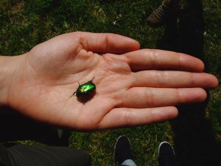 Emerald Scarab Italia - euric | ello