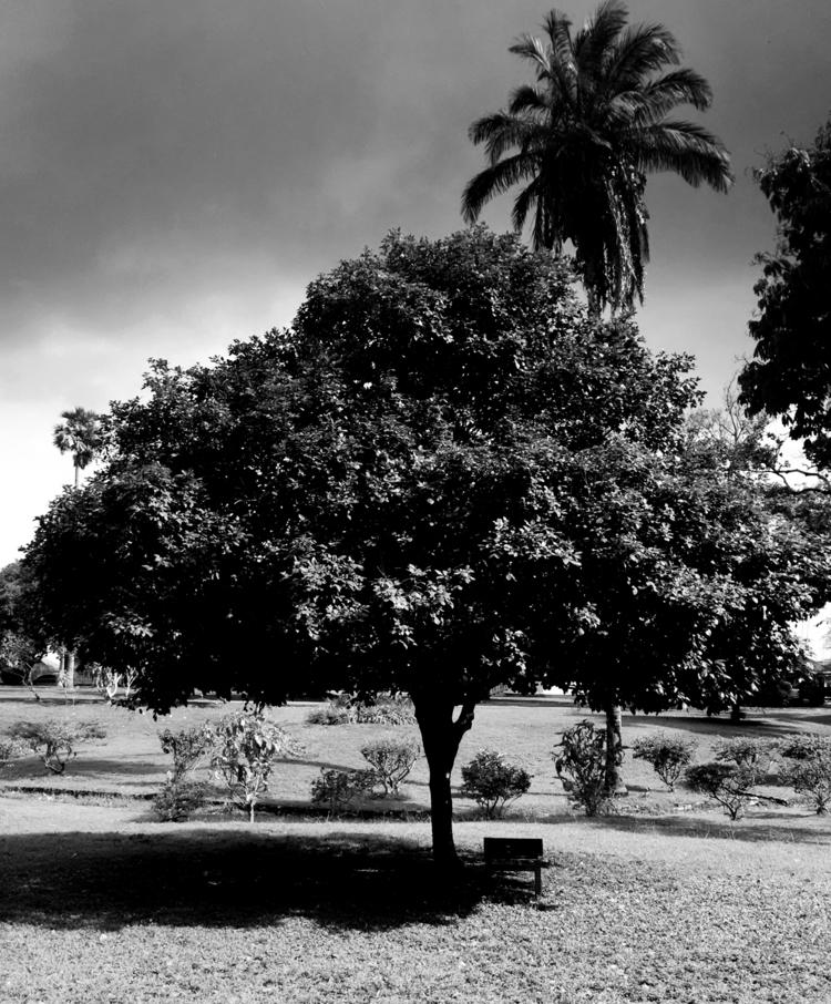 Chennette Fruit Tree clouds - agreenebrand | ello
