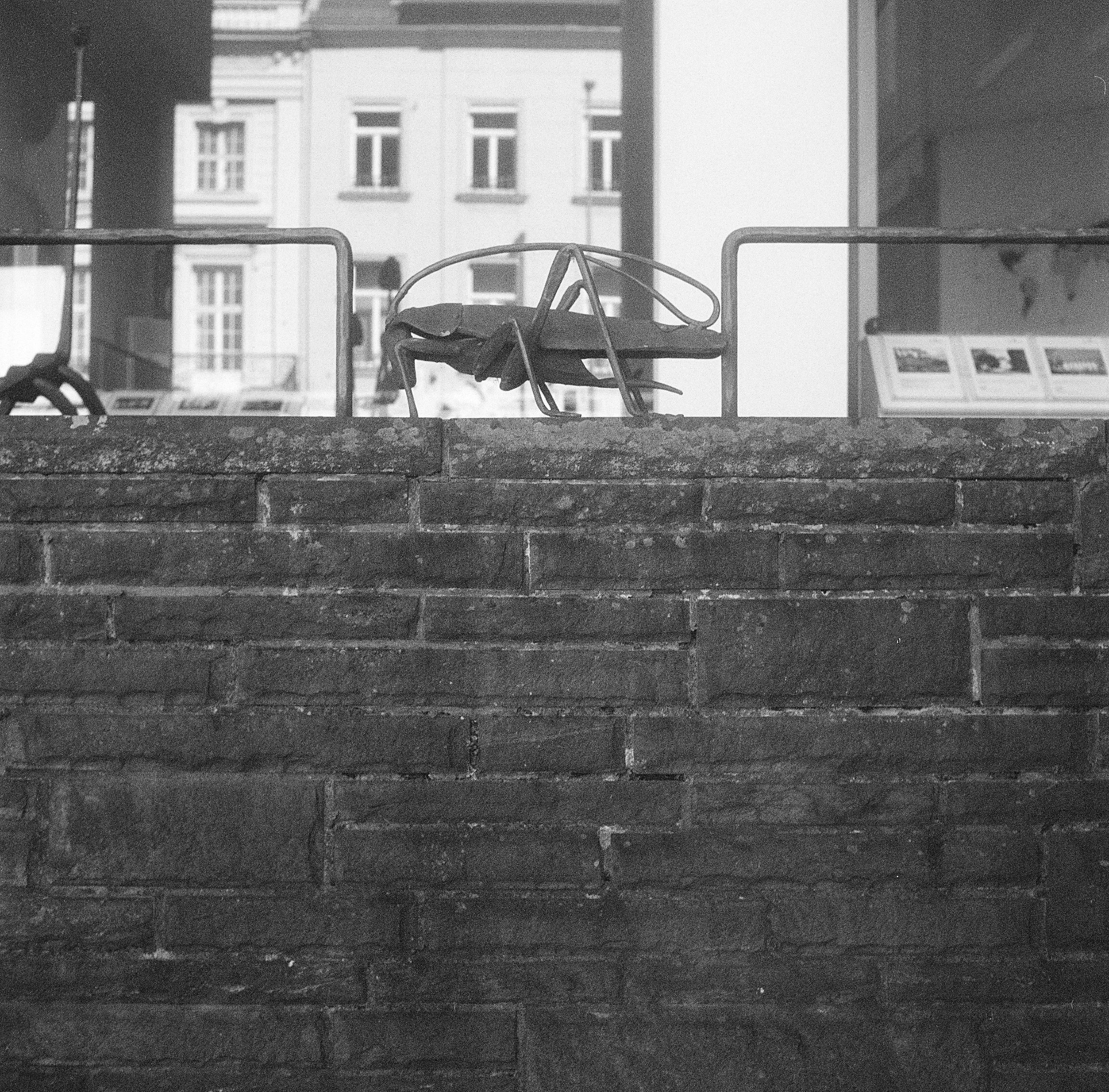Insekt Theaterstraße, Aachen Ma - walter_ac | ello