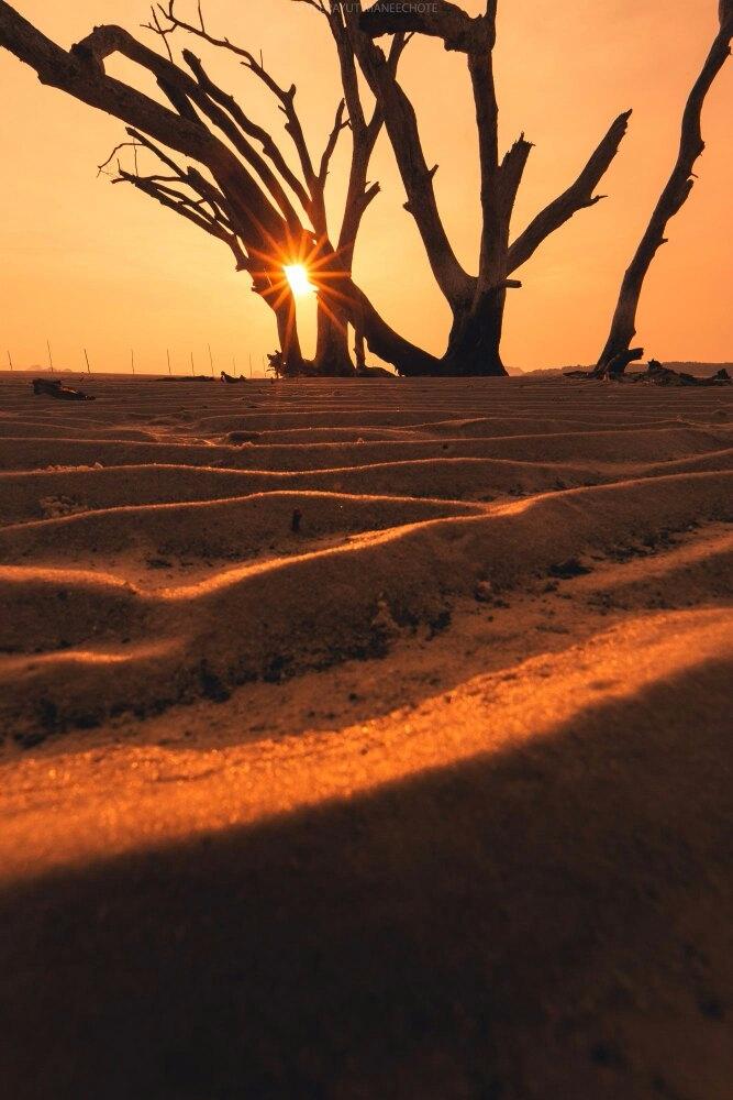 Dead Tree Veerayut Maneechote - photography - sosotrue | ello