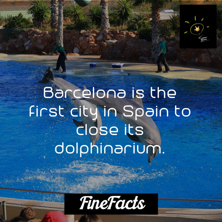 Barcelona city Spain close dolp - finefacts | ello