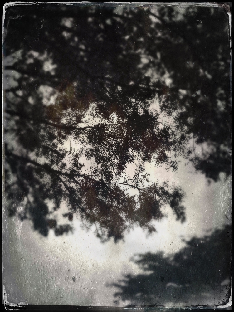 Cloudy Morning Sky Trees Apps - mikefl99 - mikefl99   ello