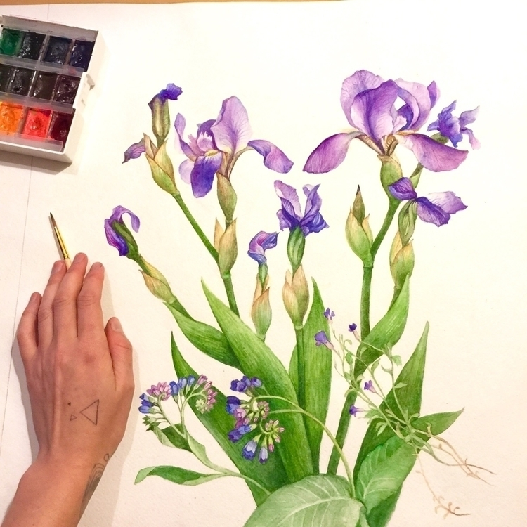 Irises botanical battle  - watercolor - evesolar | ello