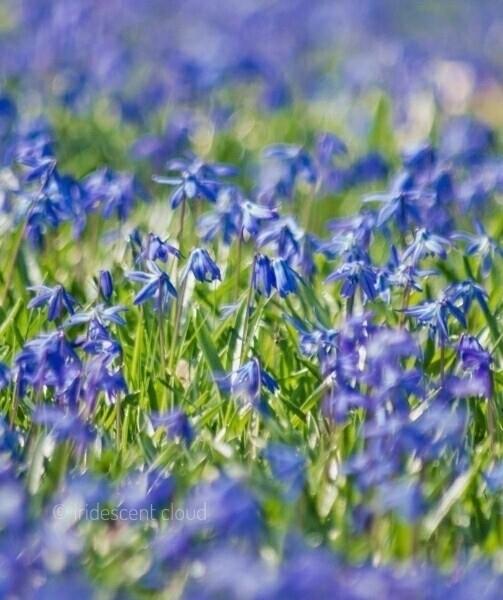Fields lens blur Nikon DSLR D32 - iridescentcloud | ello