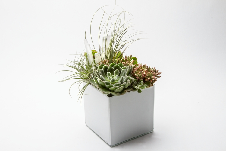 kokedema, succulents, airplants - kpcollaboration | ello