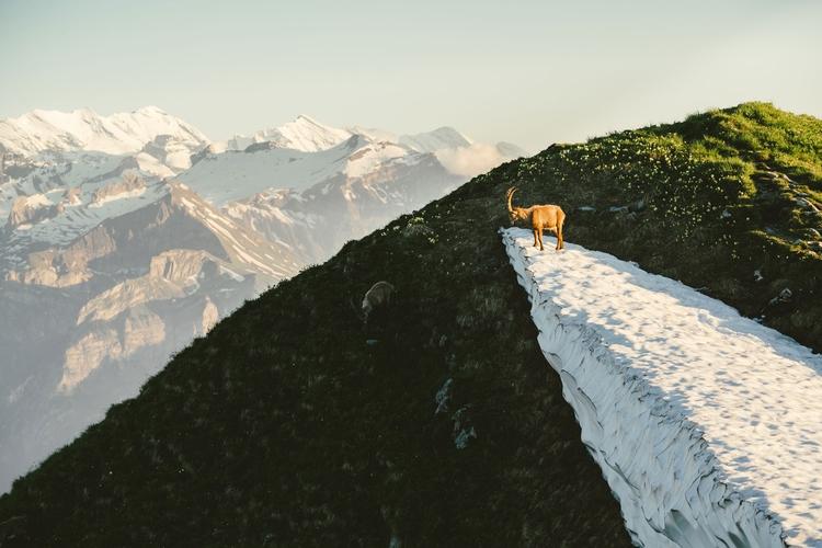 Swiss Alps - rawmeyn | ello