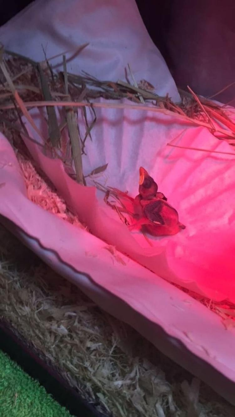 Baby Bird Sparrow soaking warmt - grayvervain | ello
