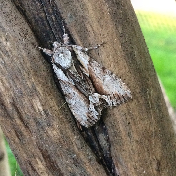 beautiful moth outdoor area alt - thewhimsicaloffshoot | ello