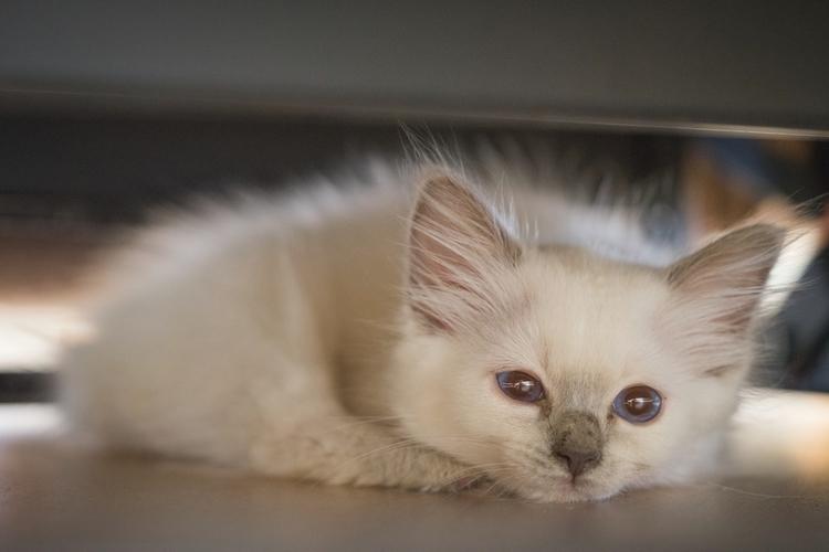 *Sleepy Ylva* kitten stop long  - jeffmoreau | ello