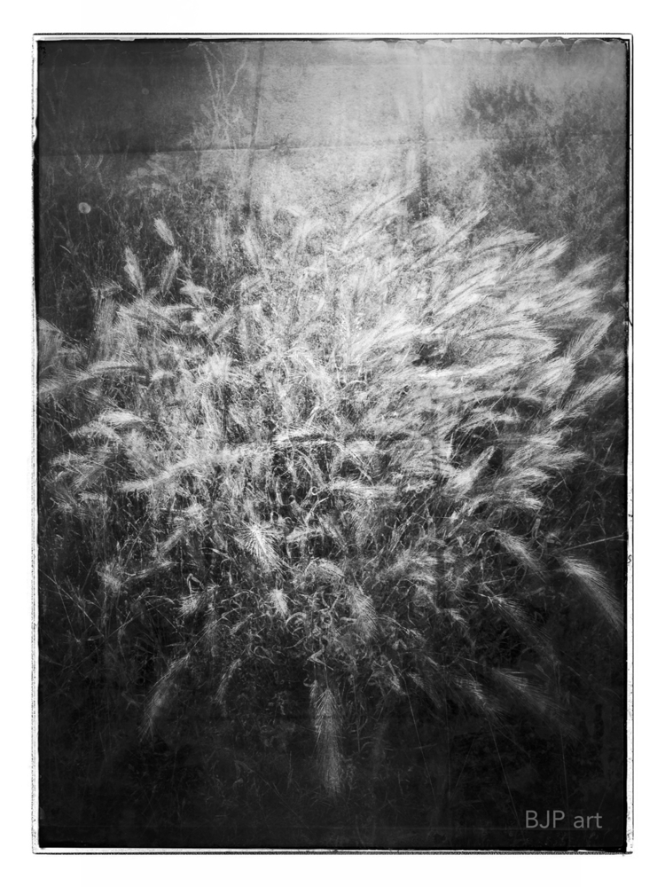 Grasbusch  - BJP_art, Lichtspurkomposition - bringfried | ello