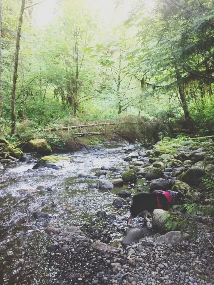 call 'Doggo rainforest' Hope we - crowandiris | ello