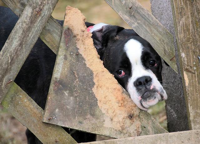 cats dogs? protecting welfare,  - zoombubba | ello