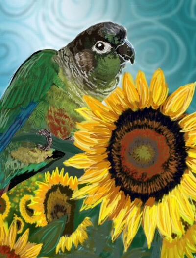 Sunflower Conure 2017 Digital M - shelbyo | ello