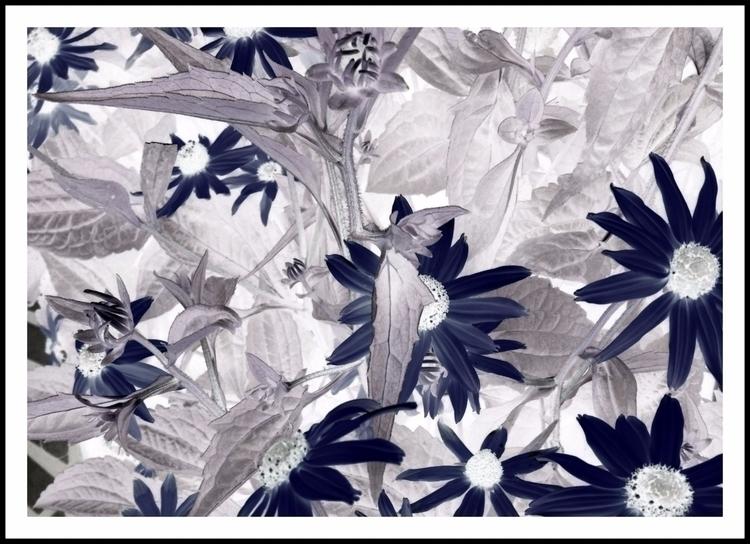 Black Daisies - photography, gardening - voiceofsf | ello