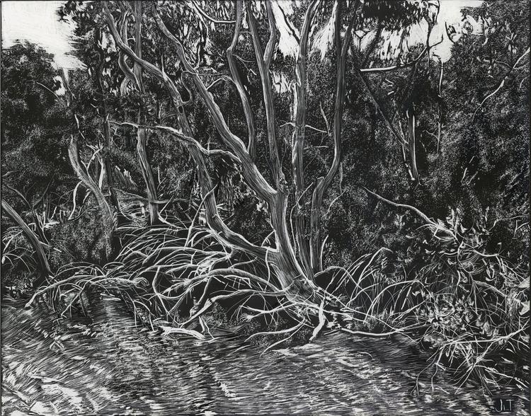 Mangroves, 11x14 scratchboard - illustration - jtiedemann | ello