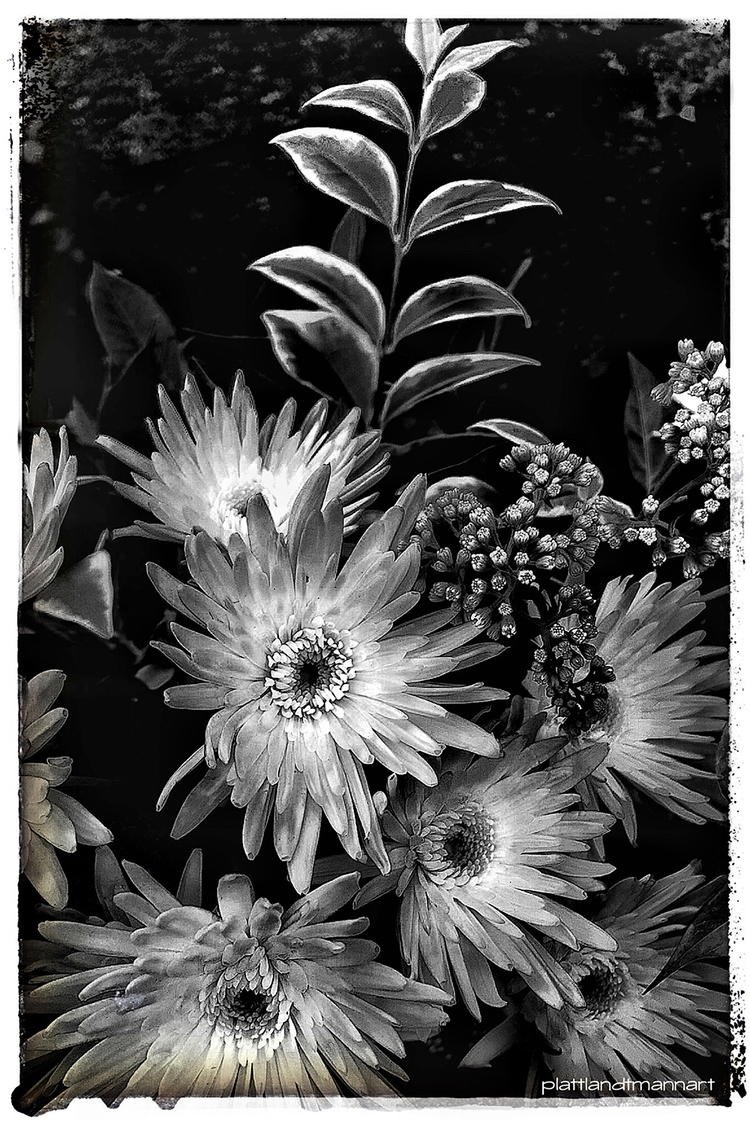 black white flower act - iphone6s - plattlandtmann | ello