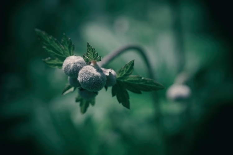 Amazeballs - photography, macro - marcushammerschmitt | ello