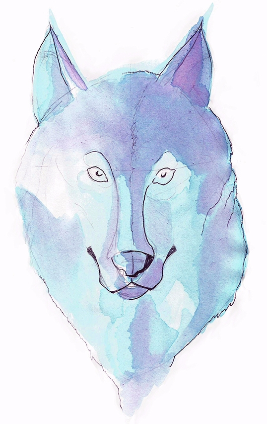 illustration, watercolor, wolf - lewm   ello