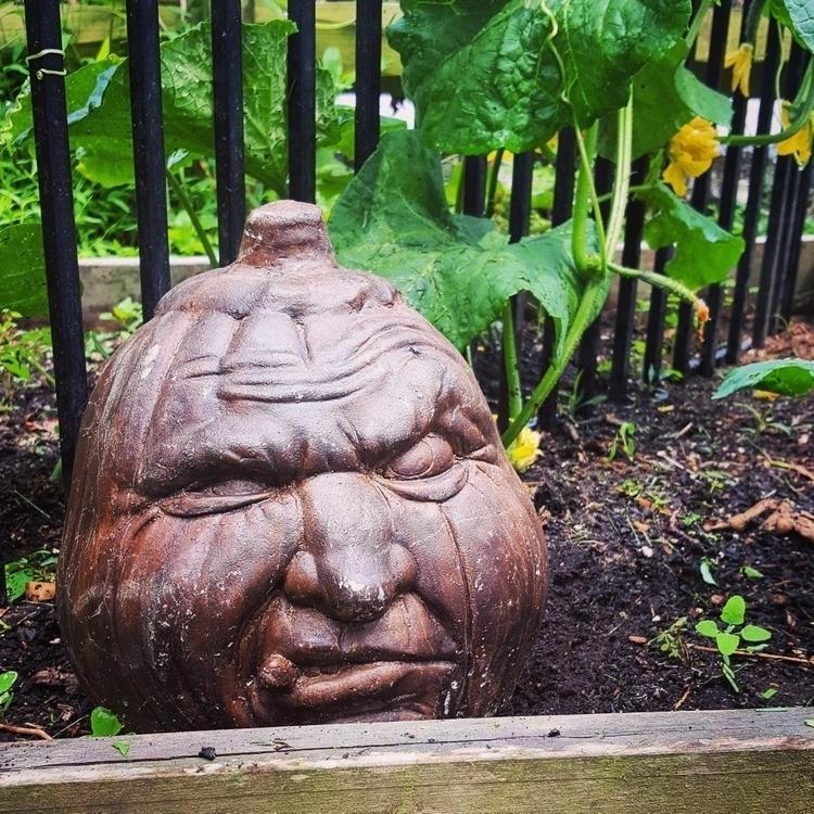 grumpy pumpkin head, quit belly - grayvervain | ello