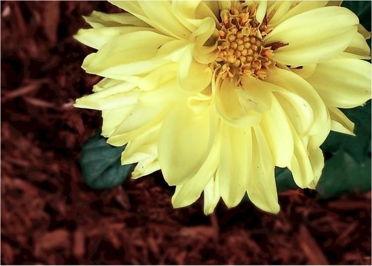 flower, garden, yellow, backagain - melgreer | ello