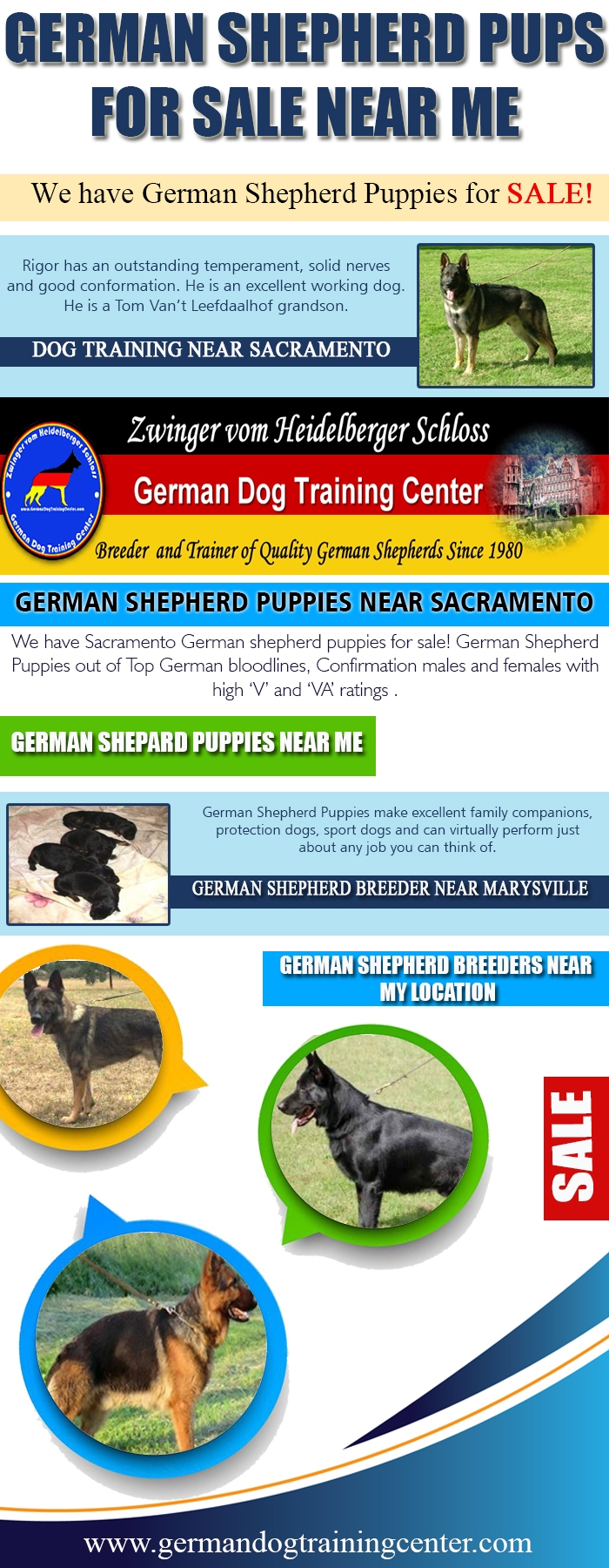 German Shepherd Pups Sale Websi - marysvilledogtraining | ello