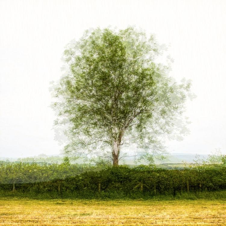 tree, angles - bradverts | ello