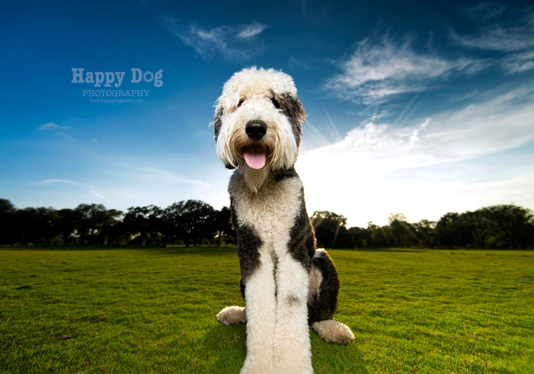 photo Goose, coolest shoot earl - happydogphoto | ello