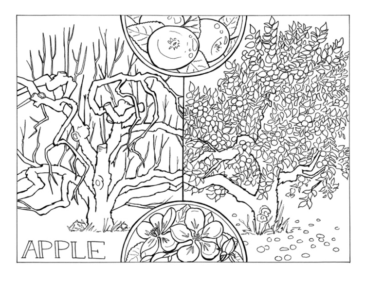 Coloring Pages - North American - evmaeve | ello