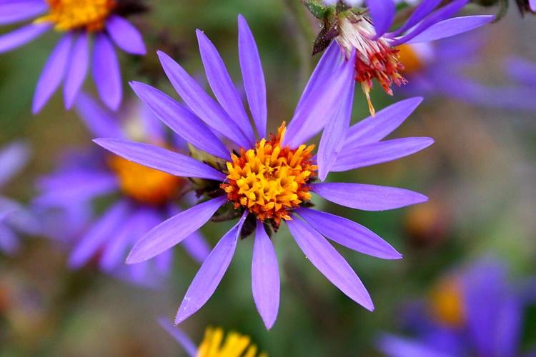 Flower. Yellowstone National Pa - vujadav17   ello