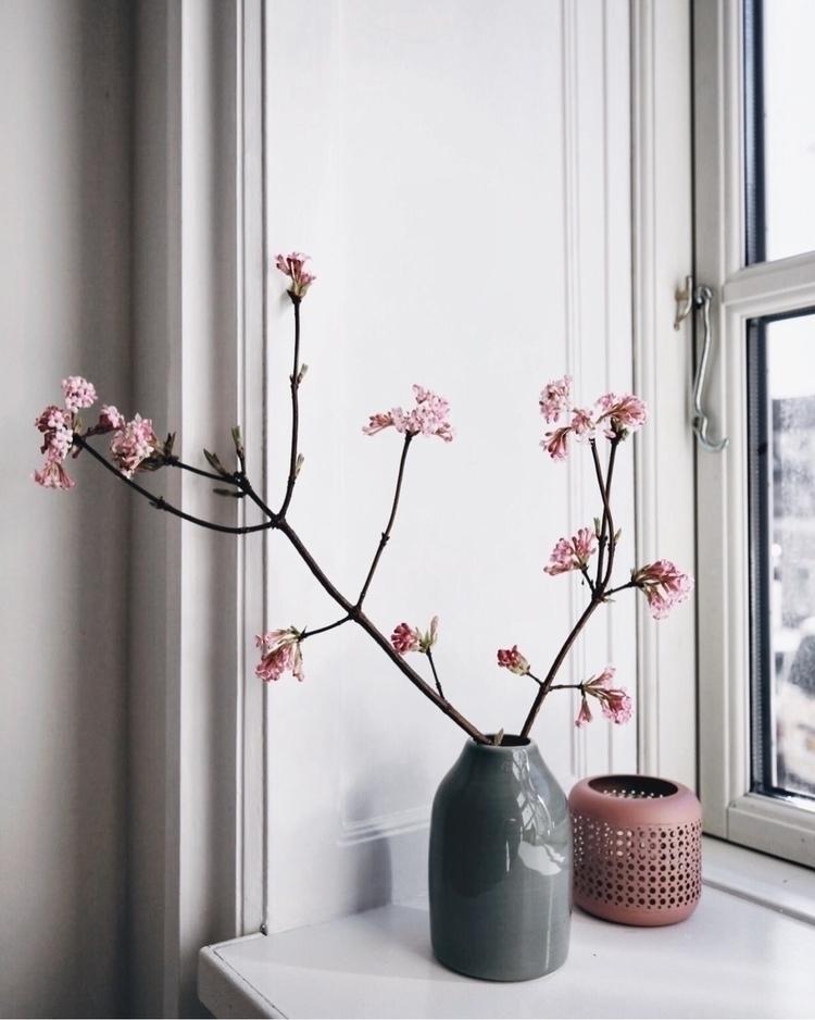 Blooming - katiu | ello