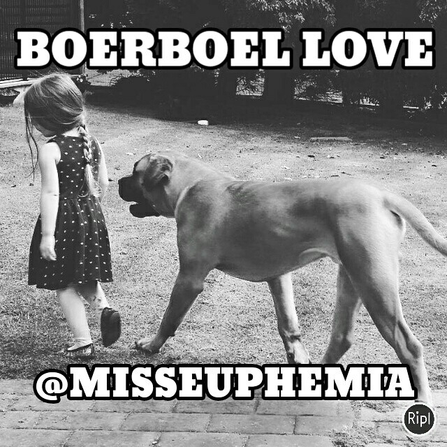 boerboel kind friend - dog, ellokid - misseuphemia | ello