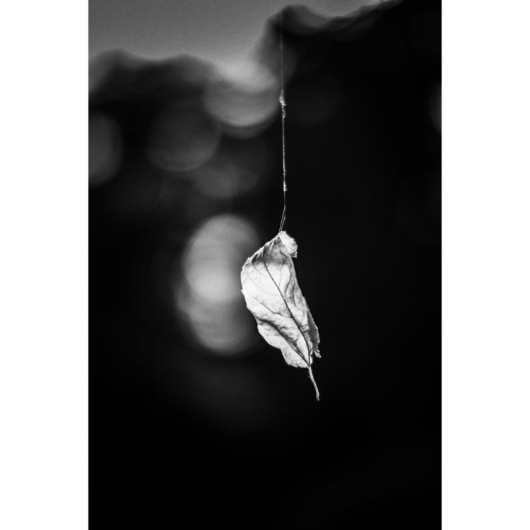 blackandwhitephotography, noiretblanc - kleefarr | ello
