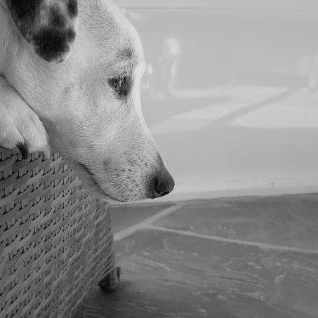 beloved Onyx RIP - jrt - grapeluv | ello