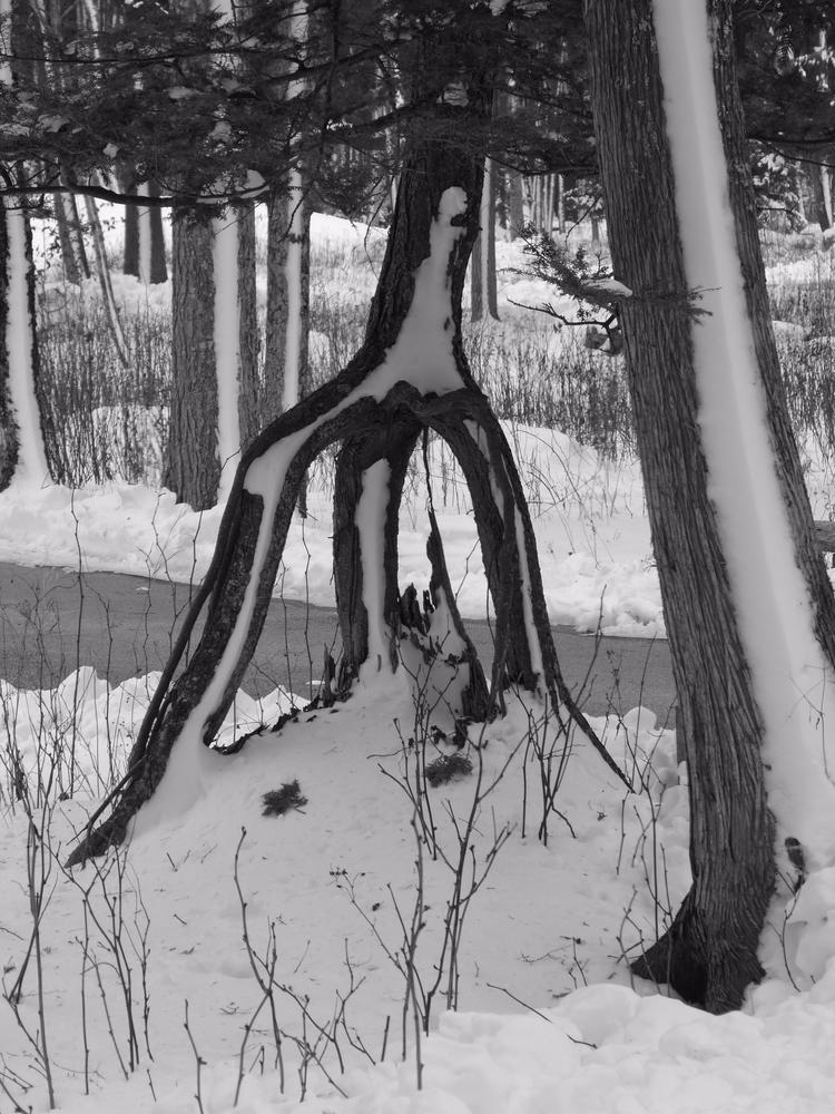 Thrice Rooted Time Rolf Olson - blackandwhite - thepoetsdoor | ello