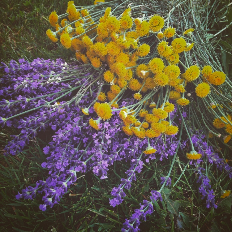 HOT today! gathered lavender sa - a_witchs_path | ello