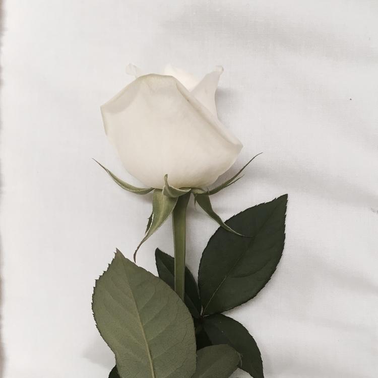 rose Dad 🖤 Passed 5 days Koa en - bec_taylor | ello