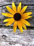 Happy Summer, happy Monday! gar - anewdayecovillage | ello