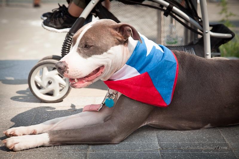 Puerto Rican Pitbull. East Rive - wlotus | ello