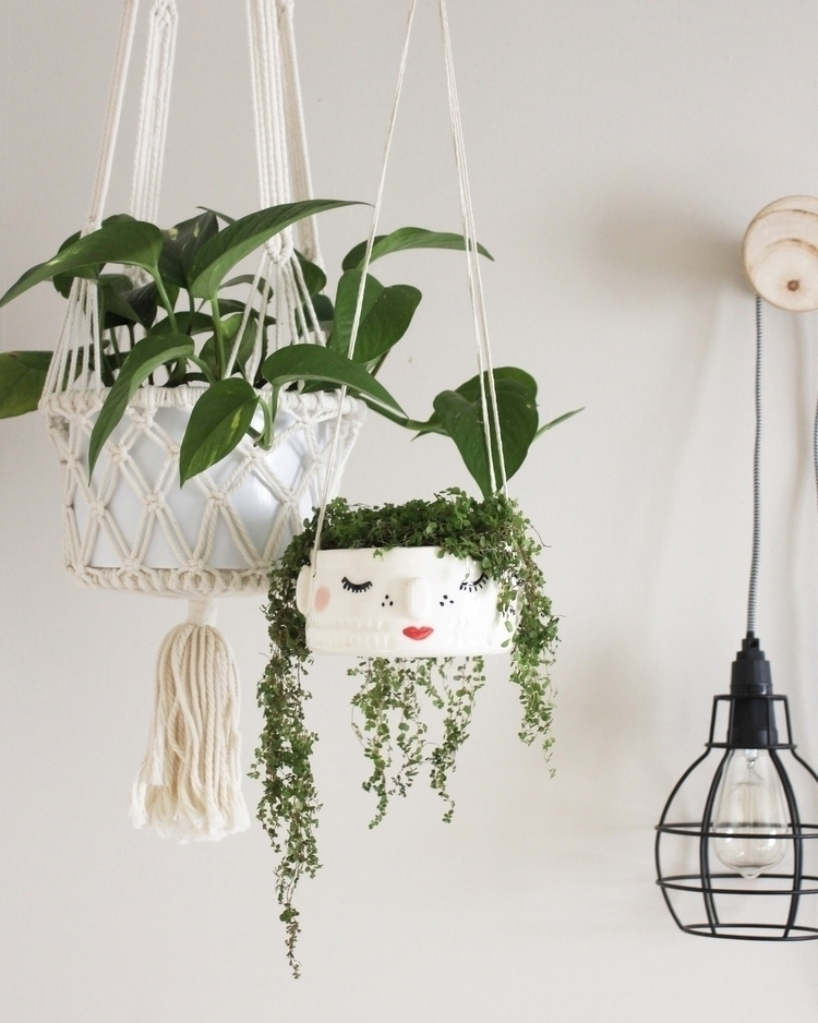 houseplant, plant, plants, hangingplants - along_came_wolfe | ello
