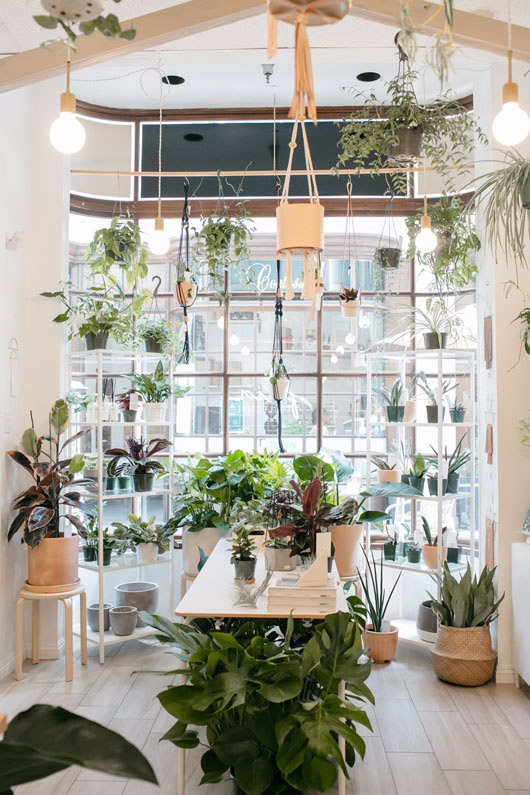 today plant paradise pasadena,  - sfgirlbybay | ello