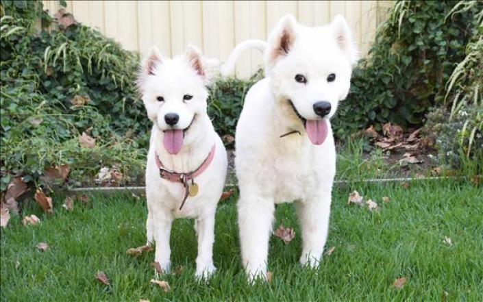 Adopt Jenny + Wesley - female m - red_wolf | ello