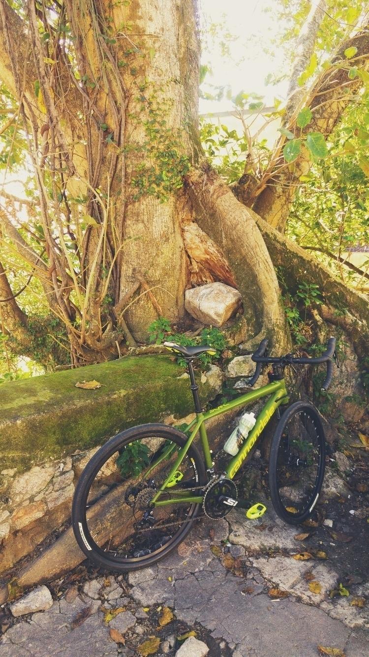 cannondale, slate105, cycling - danielgafanhoto | ello