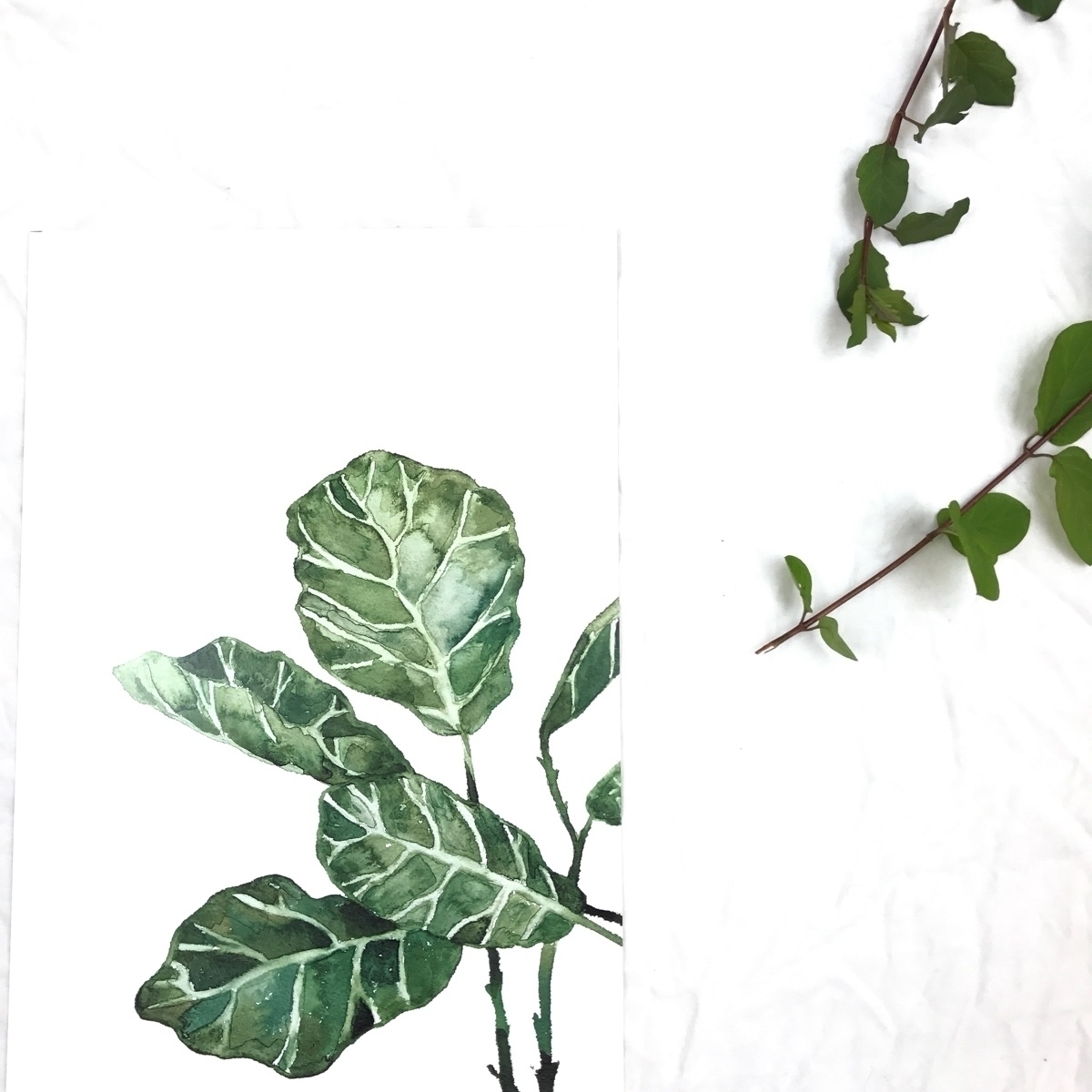 Fiddle Leaf Fig prints stock!!  - rosannahaywardportraitartist | ello